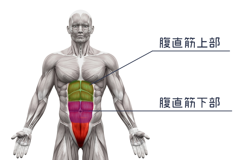 abdominal-diet-abs-workout